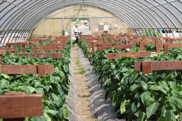 colonia-agricola-agricoltura-sociale-01