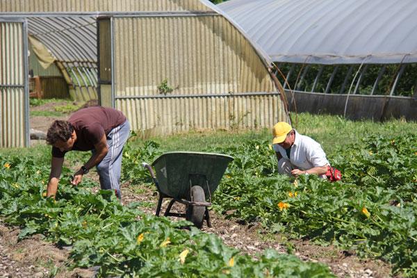 colonia-agricola-agricoltura-sociale-02