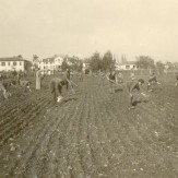 colonia-agricola-storia-03