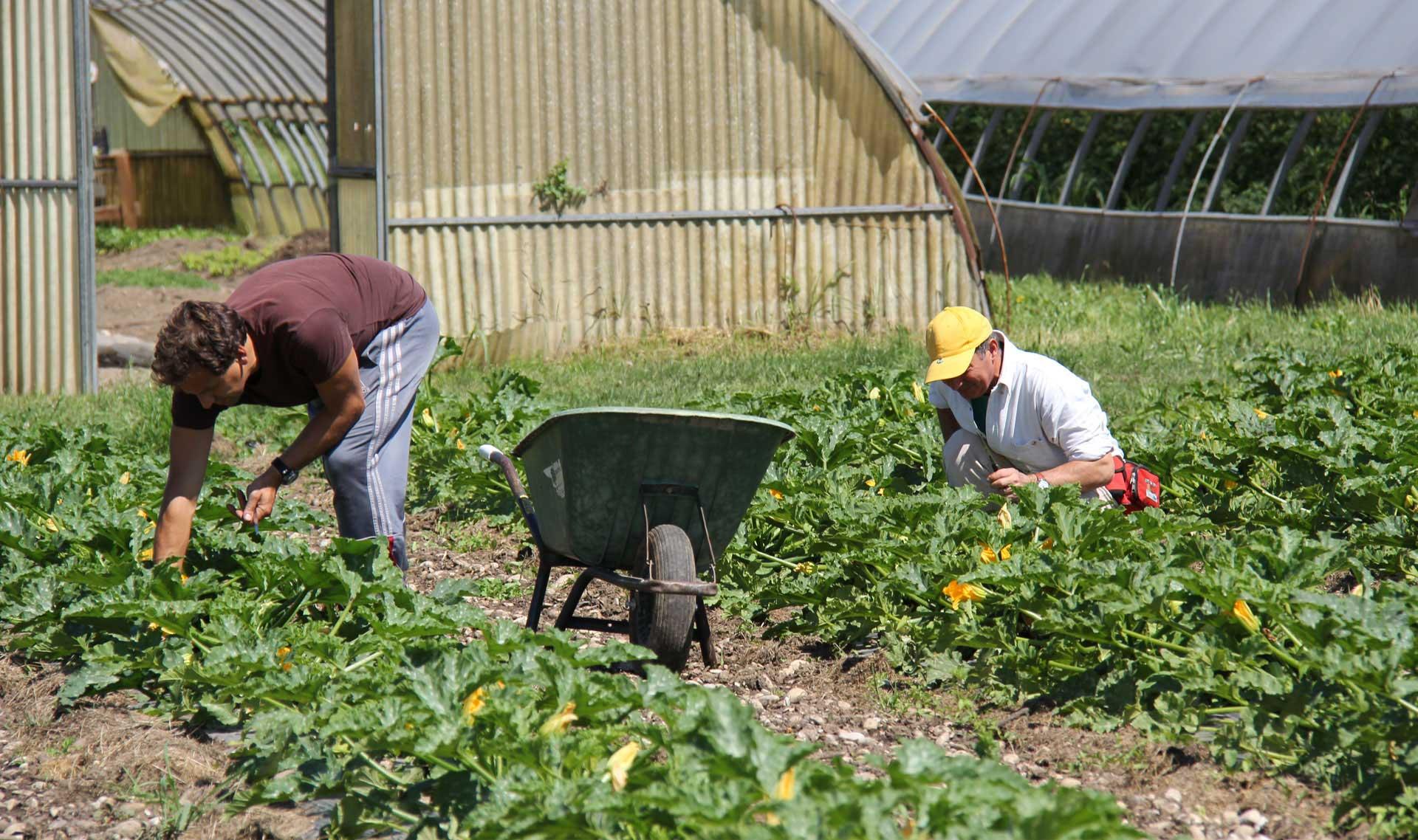 AGRICOLTURA BIOLOGICA <br />SOCIALE