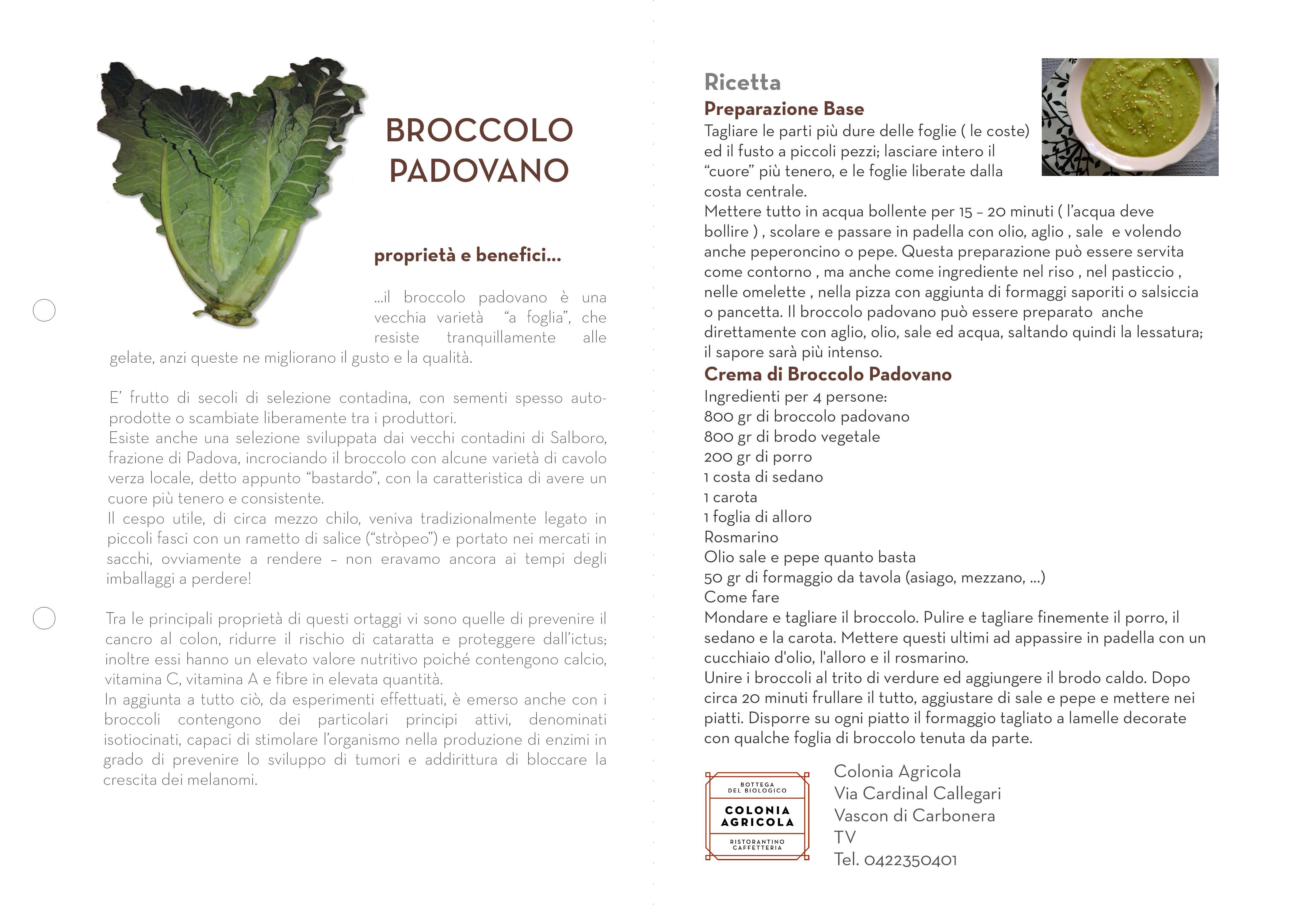 M0010_003_BroccoloPadovano001_XSOC