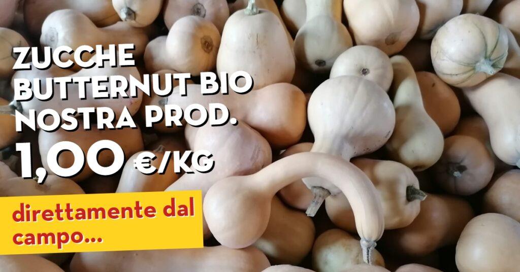 Offerta della settimana: zucche butternut bio