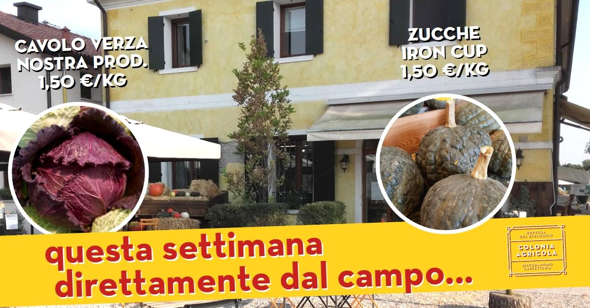 Promo Cavolo Verza Zucca Iron Cup