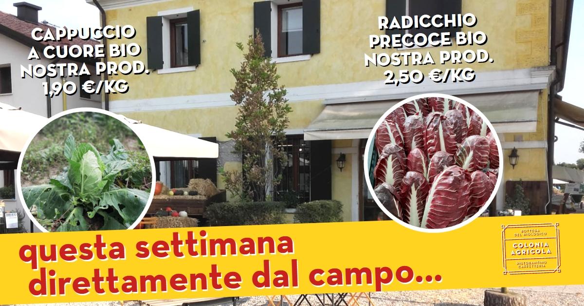 Promo Cappuccio Radicchio