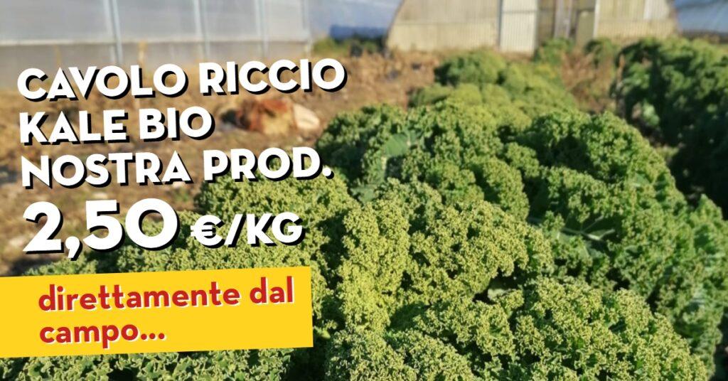 Offerta della settimana: cavolo riccio kale bio