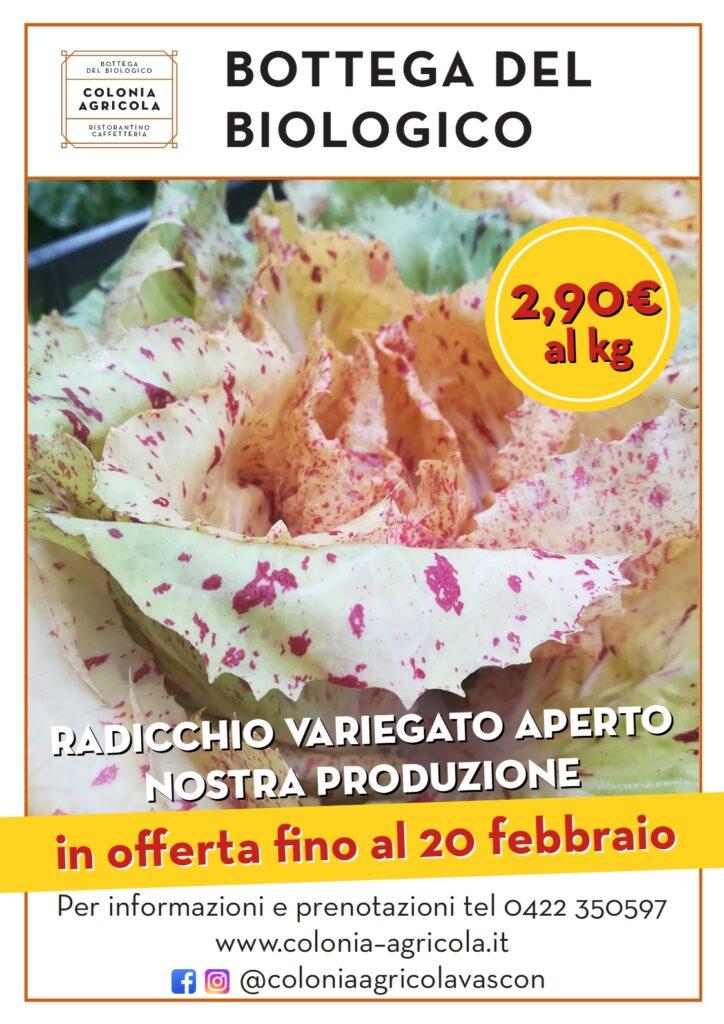 Offerta della settimana: radicchio variegato aperto nostra produzione 2,90€ al kg e aceto di mele integrale (da produttore diretto di Marano Vicentino) in sconto del 15%. In offerta fino al 20 febbraio