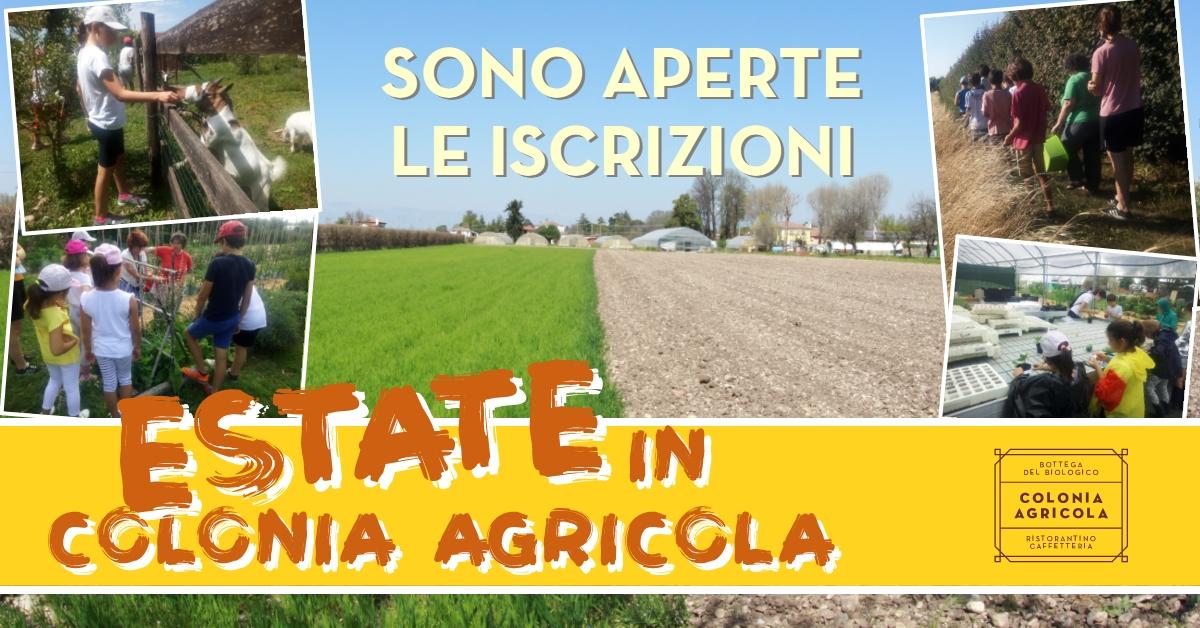 ESTATE IN COLONIA AGRICOLA 2021